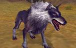 圖片: 1.狼.jpg