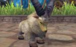 圖片: 3.羊.jpg